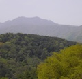 Thumbnail image for The Jirisan Forest Trail