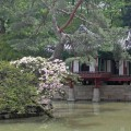 Thumbnail image for 2011 Travel Diary day 2: the Changdeokgung and Biwon