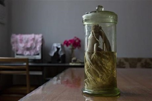 Post image for Traditional medicine is thriving in North Korea