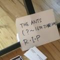 Thumbnail image for Killer creativity at the RCA graduate show