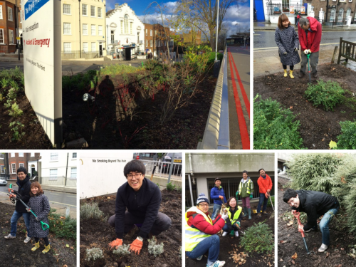 Post image for Koreans help create a garden for London's Royal Free Hospital