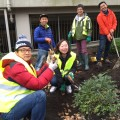 Thumbnail image for Koreans help create a garden for London's Royal Free Hospital